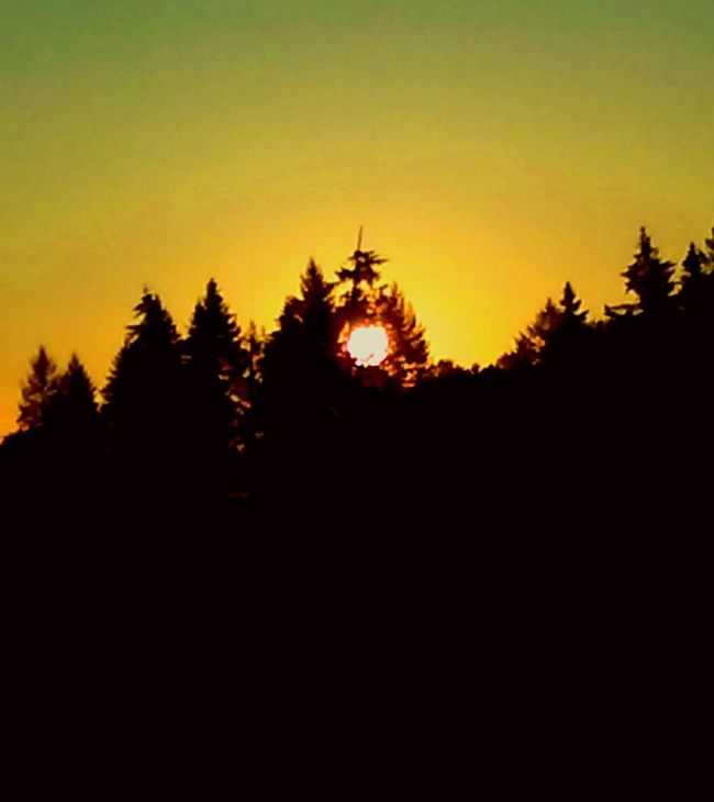 Unbridled Beauty Oregon Sunrise Sun Through The Trees Nature Rules Beautiful Nature Goodmorning EyeEm  EyeEm Best Shots EyeEm Nature Lover EyeEm Best Edits Bestoftheday Taking Photos Undeniably Beautiful Suns Coming Here Comes The Sun This Day Is Golden This Week On Eyeem August Morning Sinfullybeautiful Suns Up Sunshine ☀ Sun Through Trees Make This Day Count New Beginnings Summer Love Romance ❤✨✨