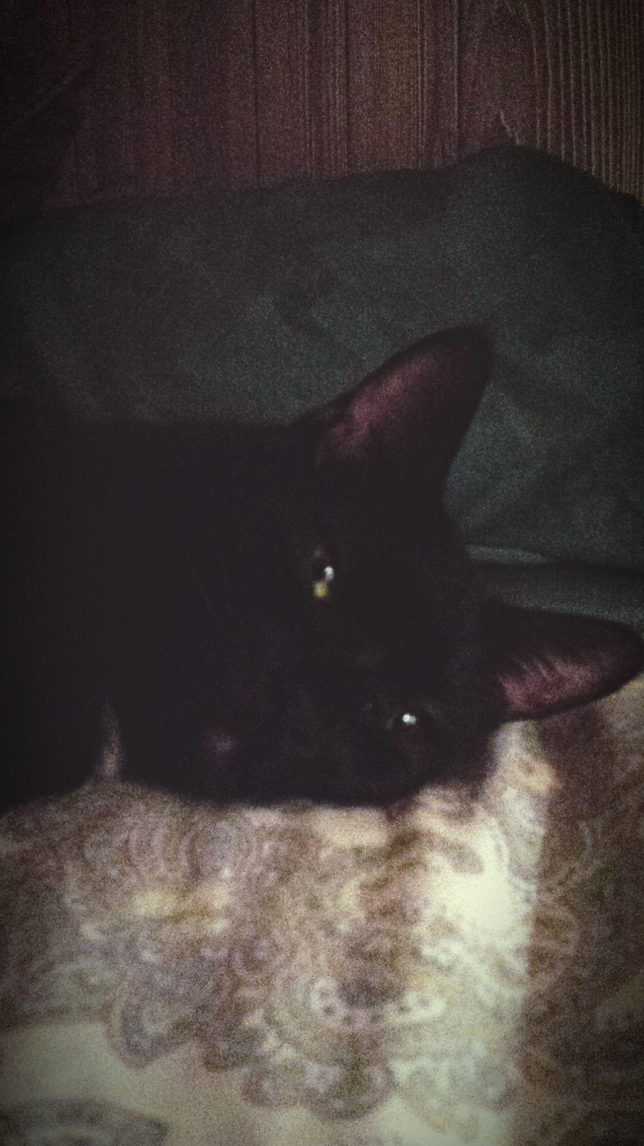 "My Boo Bear. It's not a ""get v outta bed kind of day""...."
