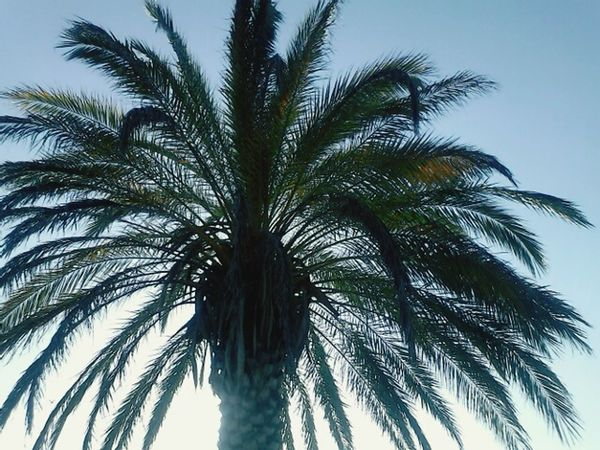Palm Trees Relaxing Enjoying Life Outdoors Beauty In Nature Taking Photos Color Of Life