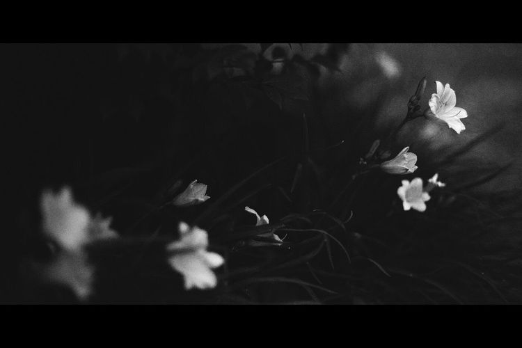 Flowers Flowerporn Night Song Monochrome ExpressYourself Eye4photography  Black And White Cinematic Point Of View Dreaming Flower Collection Flowers, Nature And Beauty