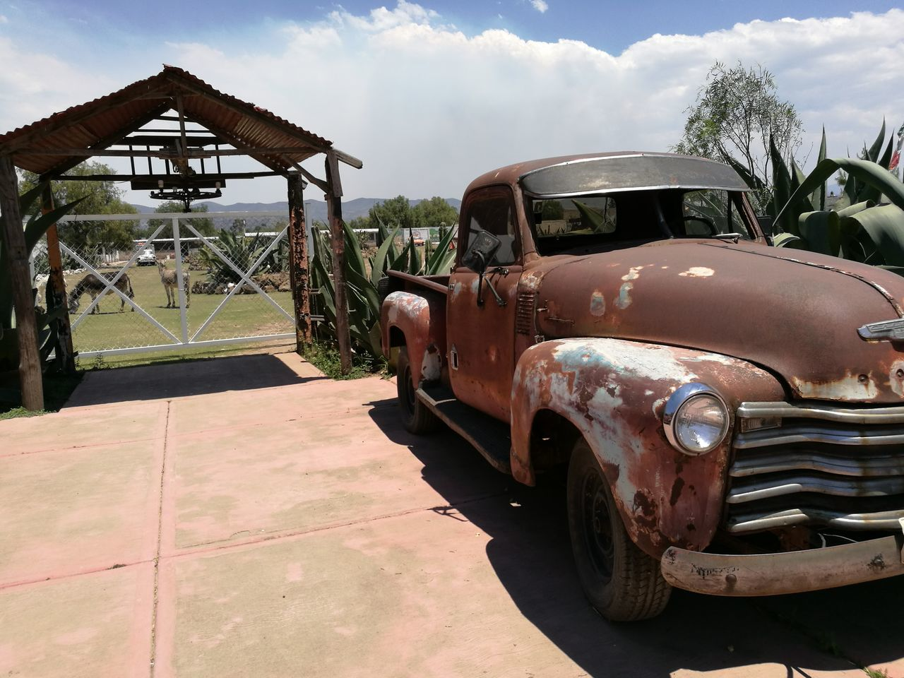 Old truck, farm, donkeys, rural, sky, Outdoors Rural Scene Old-fashioned Retro Styled Rusty Transportation Mexico