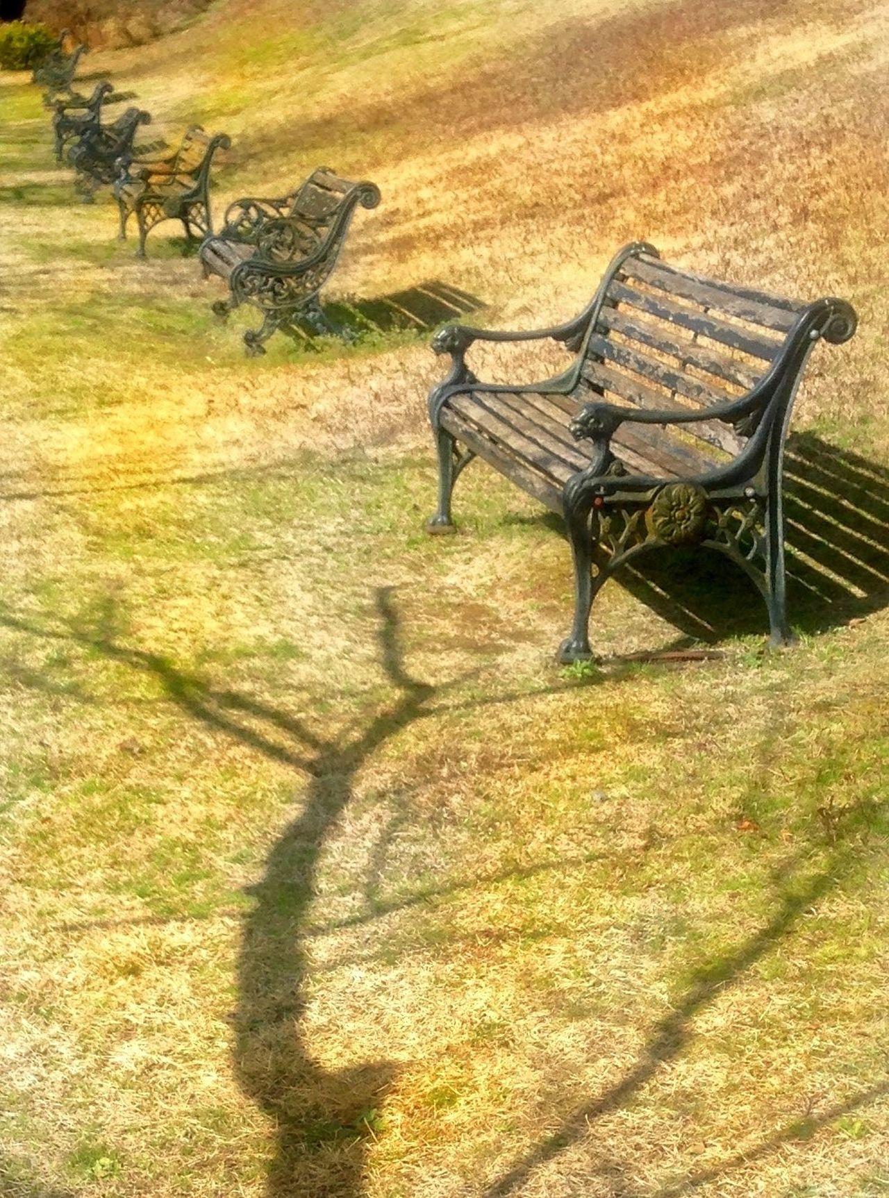 Very Soon 😎 Tree Silhouette Not Visable Shadow Sunlight Grass Outdoors Day Animal Themes Nature No People Togetherness EyeEm Japan EyeEm Best Shots Japan Saikai Japan