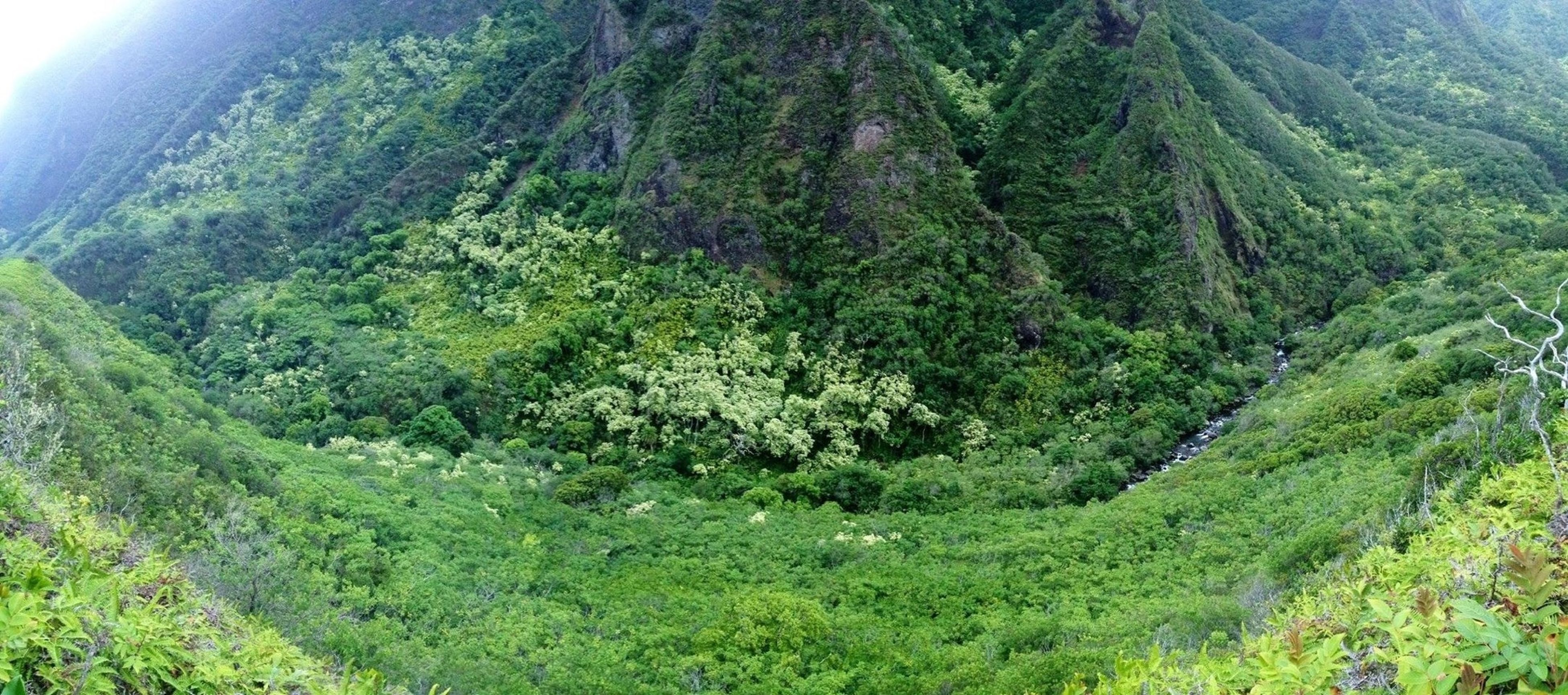 mountain, tranquil scene, tranquility, green color, scenics, landscape, beauty in nature, nature, tree, growth, non-urban scene, lush foliage, mountain range, high angle view, grass, idyllic, valley, green, plant, remote