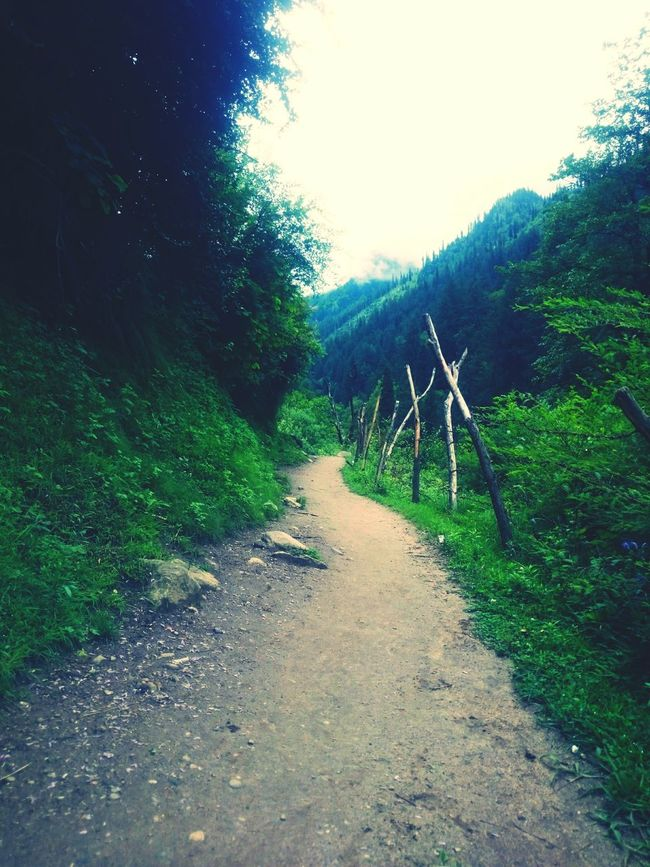 Beautiful path which lead me to a beautiful place called Tosh..