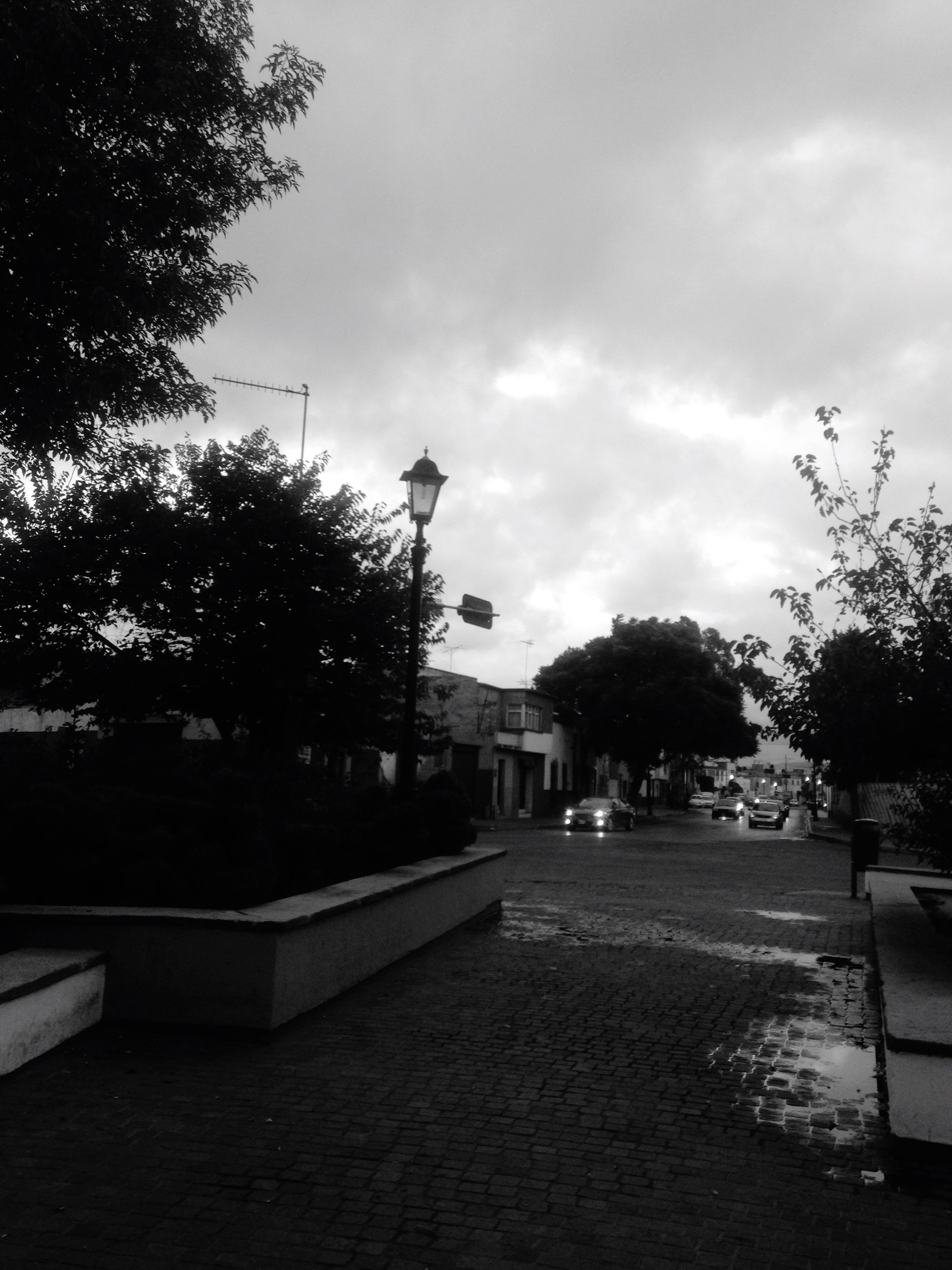 tree, sky, street light, park - man made space, cloud - sky, building exterior, day, cloud, footpath, the way forward, outdoors, pedestrian walkway, diminishing perspective, cloudy, park, town, tranquil scene, tranquility, no people