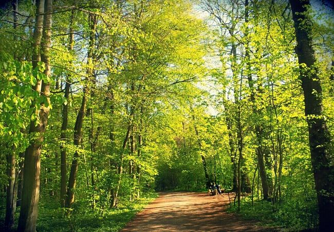 Biker Resting In The Woods Sitting Outside Looking At Trees. Sitting On A BenchSunny Day Forest Path Trees With Fresh Green Leaves Cityforest Frankfurt Am Main Germany🇩🇪 The Great Outdoors - 2016 EyeEm Awards The Great Outdoors With Adobe My Favorite Photo The Essence Of Summer