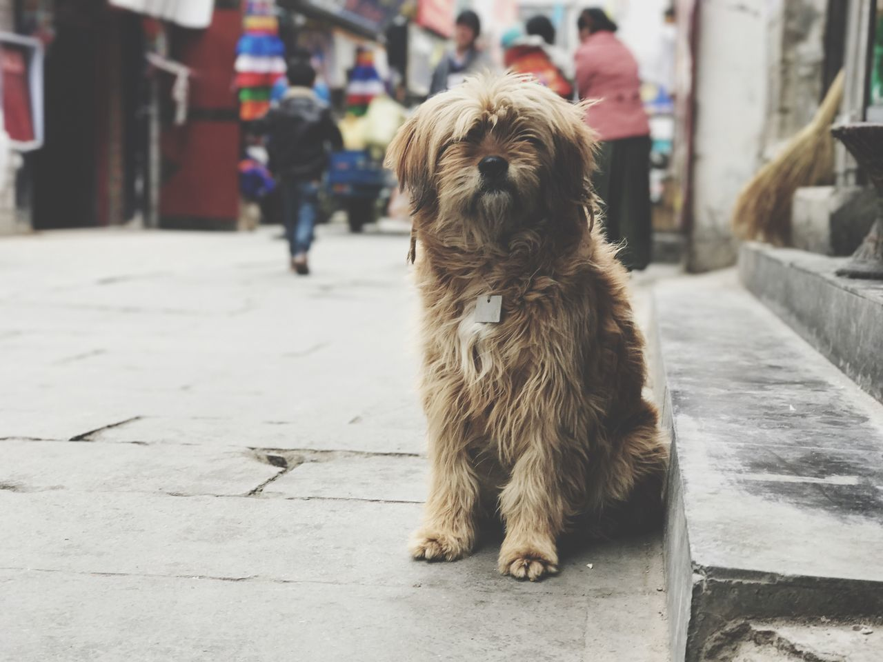 EyeEm Selects Dog One Animal Pets Animal Themes Domestic Animals Focus On Foreground Mammal Day Outdoors Real People Full Length Close-up