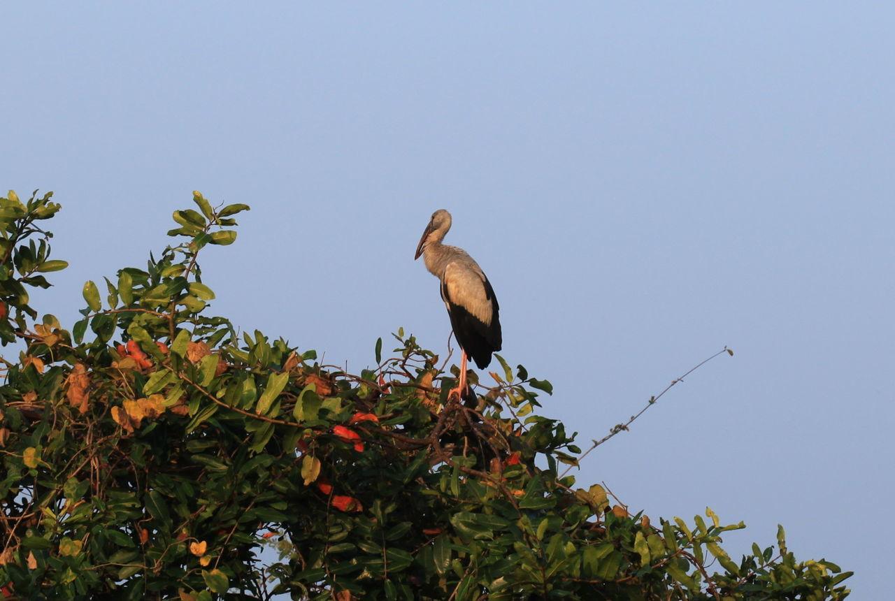 Animal Themes Animals In The Wild Big Bird Branch Bue Sky Day Habarana Nature No People One Animal Outdoors Sri Lanka Tree Wildlife