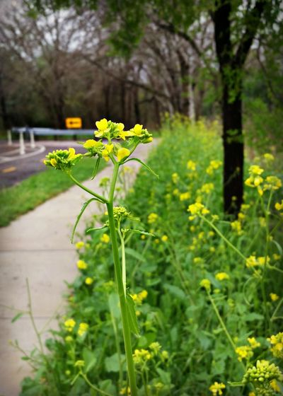 Arrow Beauty In Nature Bike Lane Flower Nature No People Outdoors Plant Sidewalk Street Photography Yellow
