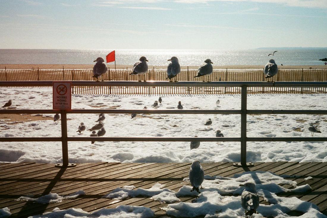 Coney Island / Brooklyn NY New York Eye4photography  35mm Film 35mm Olympus Trip 35 EyeEm Best Shots NYC Photography Street Photography Winter Nature The Great Outdoors - 2016 EyeEm Awards