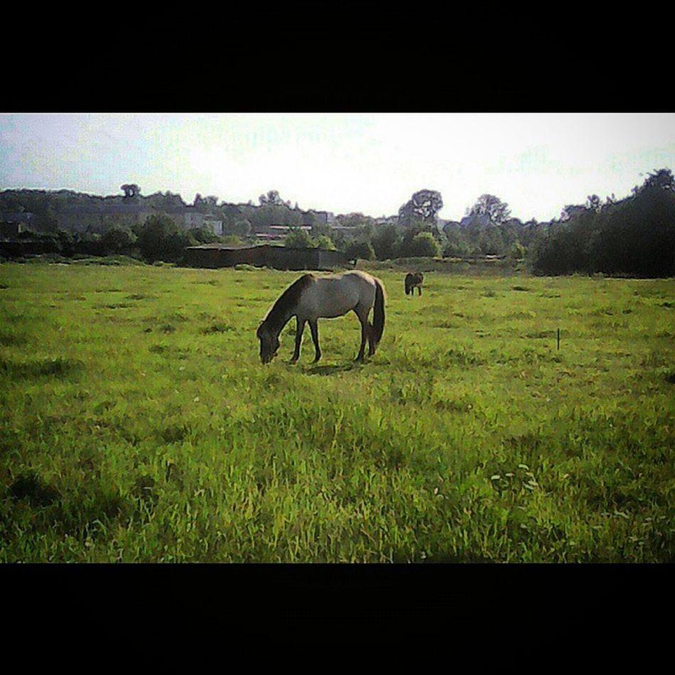 Squareinstapic КСКГармония Ослик НаВыпасе Лошадь ЛошадьНаВыпасе ЯЛюблюЛошадей Donkey PhotoSpam HorseLovers Horse HorseLoversClub НаВыпасе КЛЛ ЧастнаяКонюшня ЛюбителямПрироды ЛюблюЛошадей ЛюбителямЛошадей Animals DomesticAnimals HorseForse AnimalLovers Архив2015ОК_
