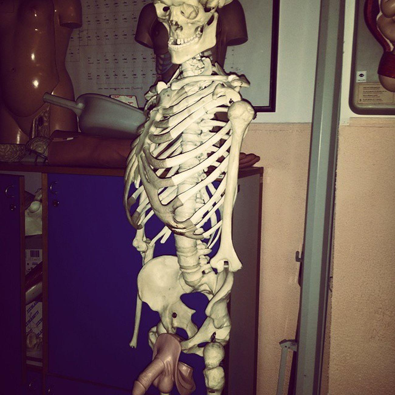 Scheletro porcello !! Scheletro Minchia Capocchia Brisolca Uccello Pisello Rome University Nurses Beautiful Wonderful Skeleton Maiale Porco