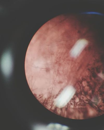 No People Close-up Microscopic View Microscope Science Class Labratory Science Eye Day Science Experiment!  Letter E Microphotography