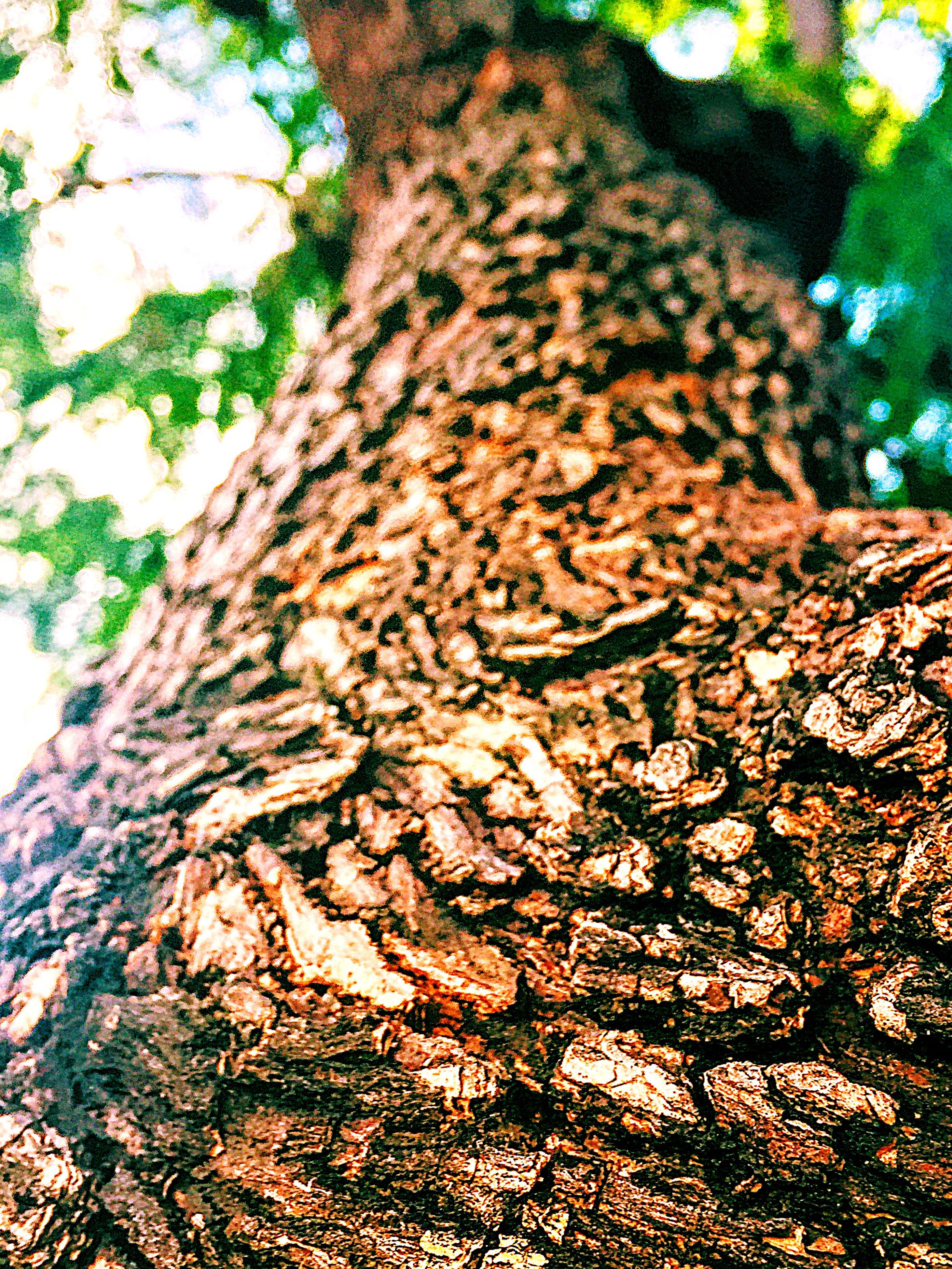 nature, growth, tree, no people, outdoors, beauty in nature, leaf, day, close-up, sky