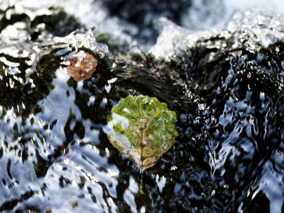 Leaves🌿 Nature Photography The Week On EyeEm Beauty In Nature Close-up Day High Angle View Leaves Leaves On The Water Leaves_collection Nature Nature_collection No People Outdoors River Shallow Shallow Water Water Waterfall