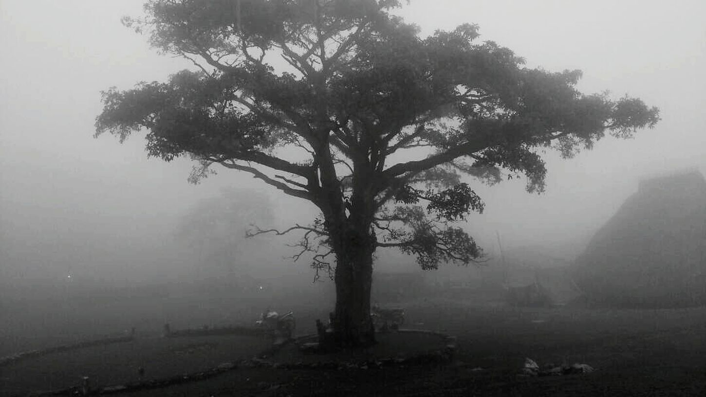 He went there and send me this lovely View😍 Fog Tree Social Issues Smog Landscape Weather Morning Nature Outdoors Rural Scene No People Mountain Beauty In Nature Scenics Day Grass Beauty Branch Tree Area Sky MadeInTimorLeste Travel Destinations Photography MyPhotography Monochrome Photography