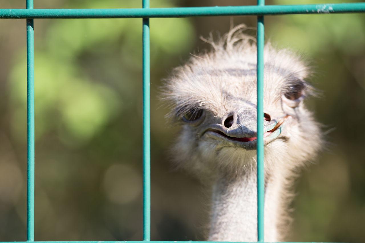 Beautiful stock photos of funny animal, Animal Head, Animal Themes, Animals In The Wild, Bird