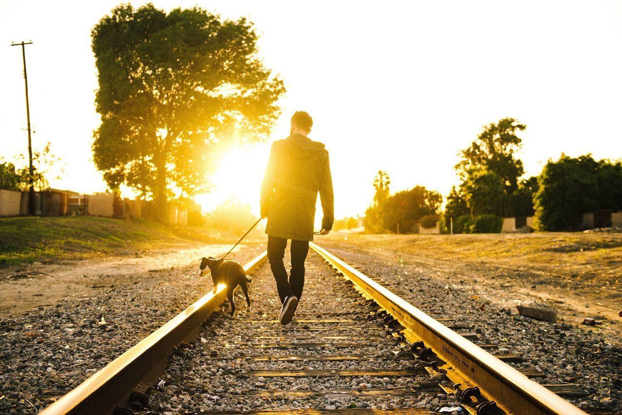 Beautiful stock photos of life, Back Lit, Day, Diminishing Perspective, Dog