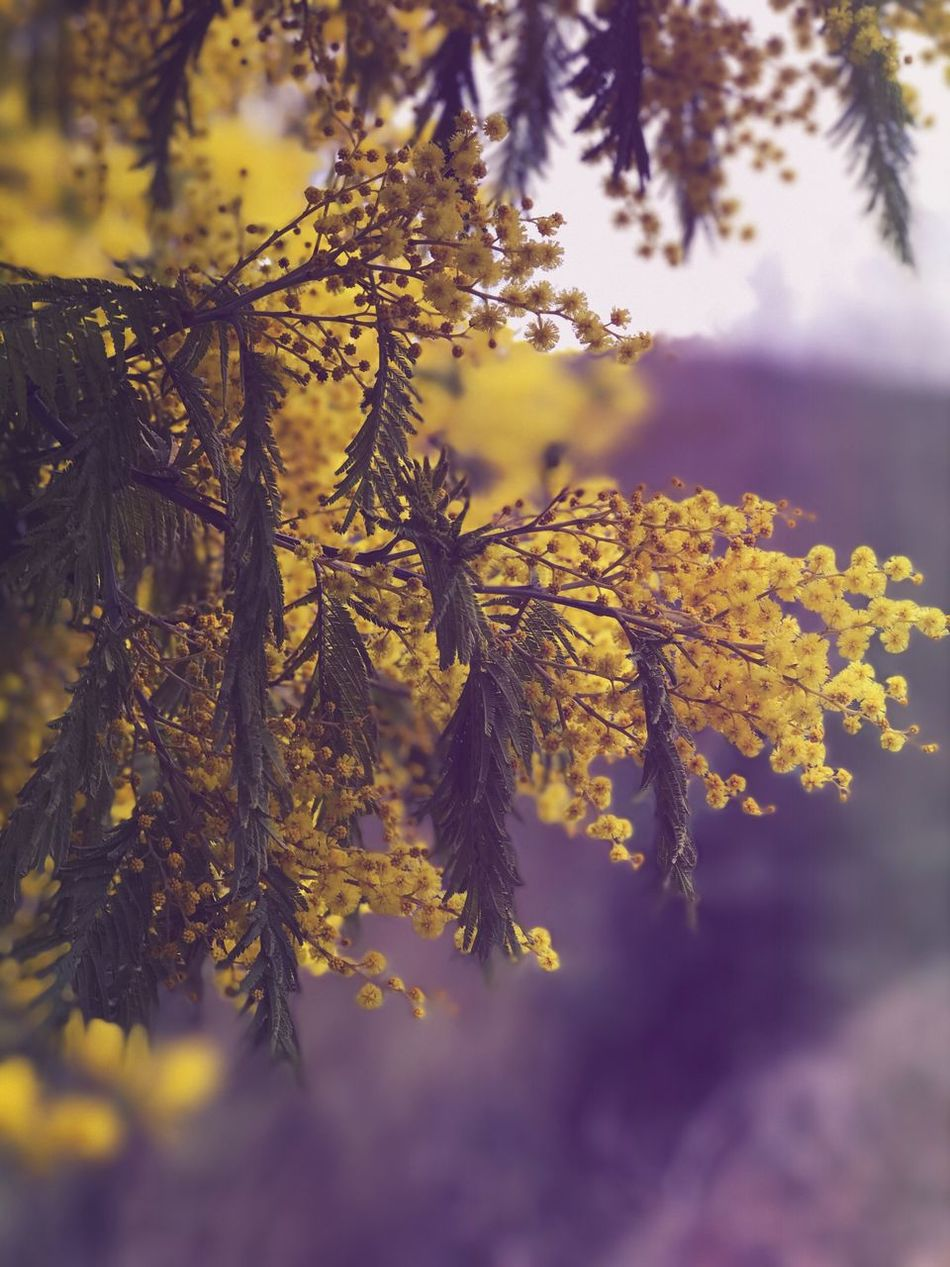 Nature Growth Beauty In Nature Outdoors No People Close-up Tree Fragility Branch Day Tranquility Flower Freshness