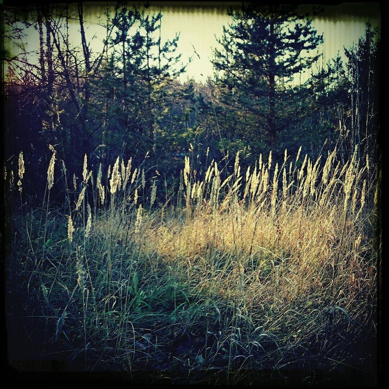 Lokakuu Luonto Suomi Metsä