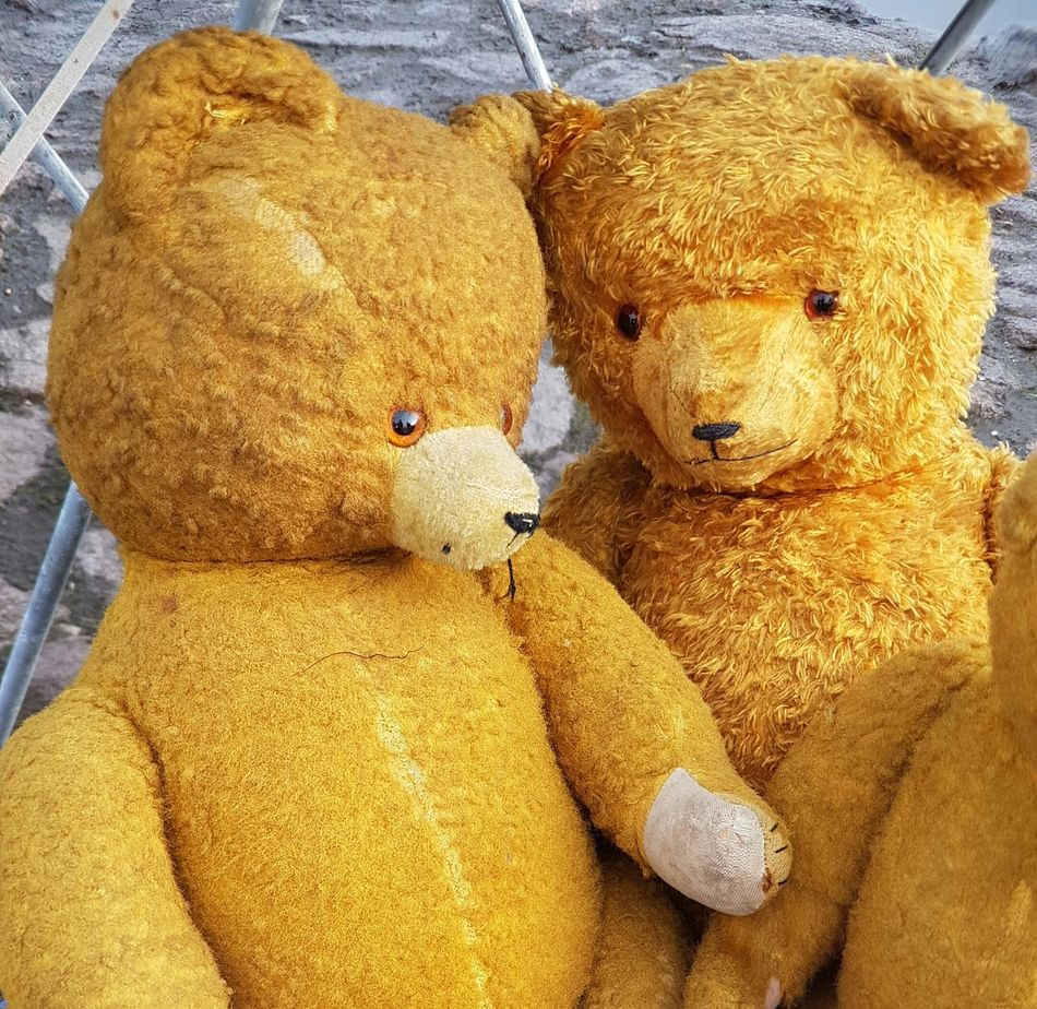 Teddy Bear Stuffed Toy Toy Bear Old Toy Stuffed Toy Stuffed Bears Friends Forever Together Together Forever Flea Market Fleamarket Flea Markets Brocante Old Things Vintage Stuff Background Cover