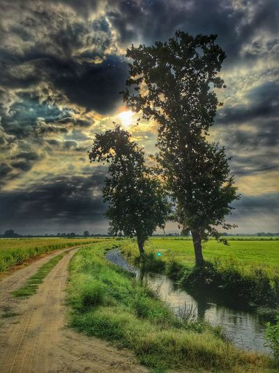 Cloud - Sky Grass Sky The Way Forward Tree Nature Scenics Tranquility Landscape Tranquil Scene Beauty In Nature Field Outdoors No People Growth Road Day Rural Scene Sunset