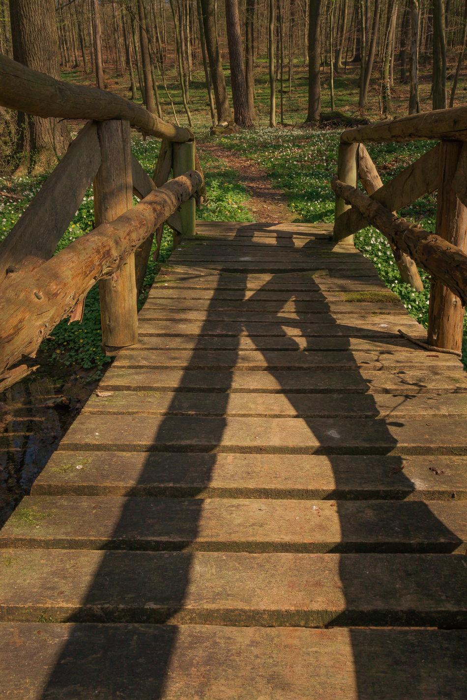 Walk me to the bridge. Anemone Nemorosa Buschwindröschen Day Ficaria Verna Forest Forest Path Lesser Celandine Nature No People Nusshain 04 17 Outdoors Scharbockskraut Shadow Springtime Way Forward Wood - Material Wood Anemone Wooden Bridge