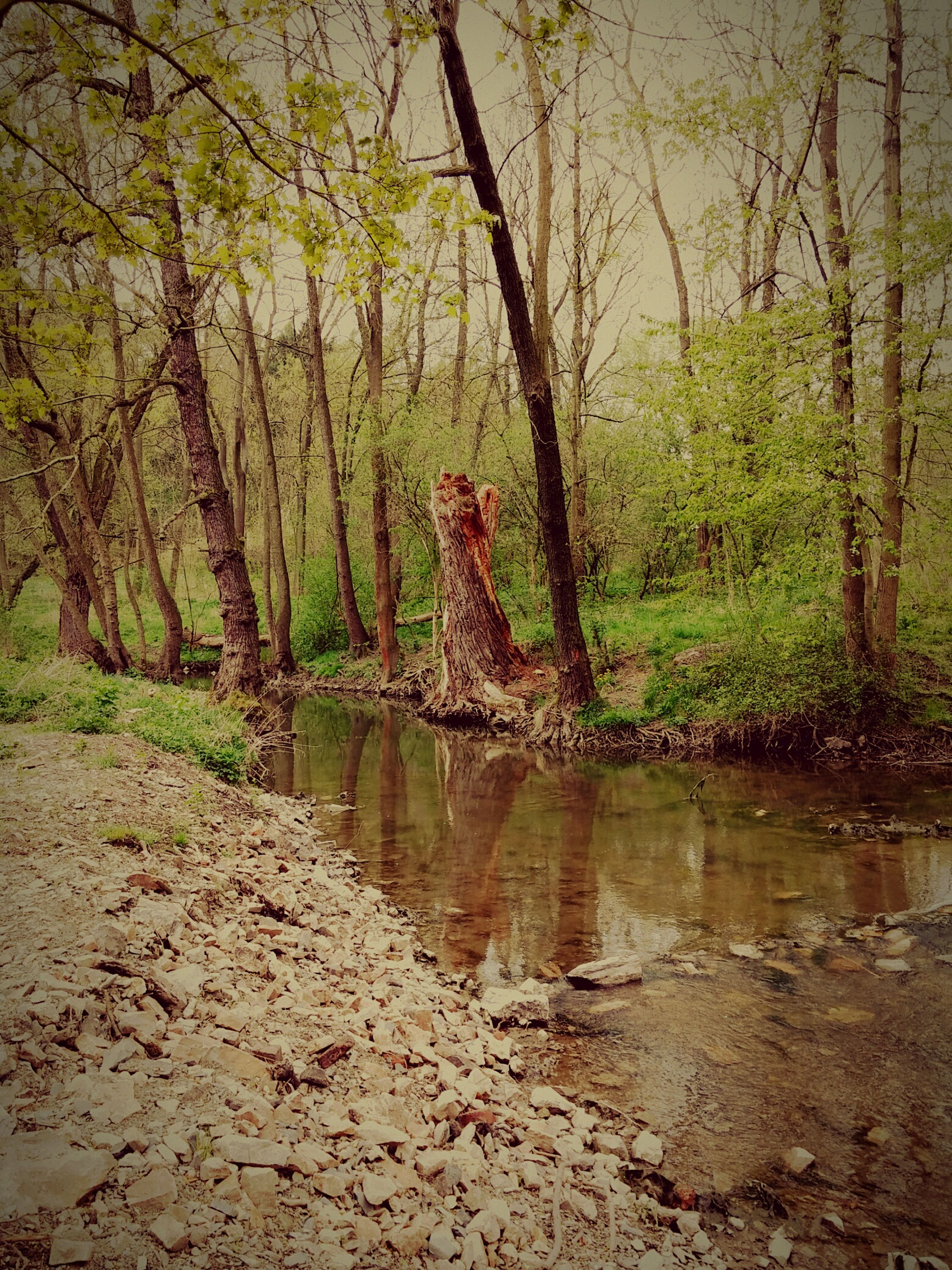 tree, water, tranquility, tranquil scene, reflection, lake, branch, nature, scenics, beauty in nature, forest, tree trunk, bare tree, river, non-urban scene, growth, idyllic, outdoors, lakeshore, no people