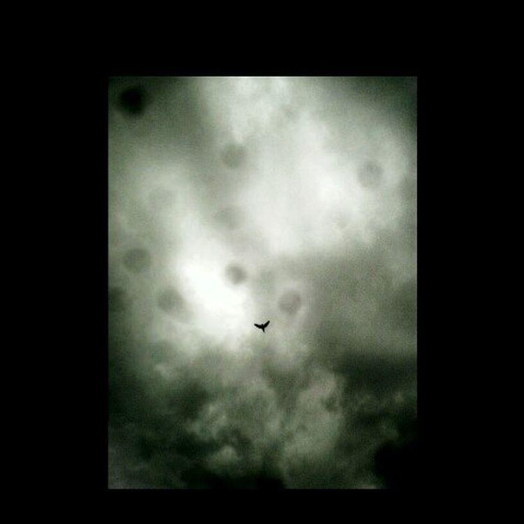 """""""Un volar de sentimientos impuros"""" Instaosorno Instagra Instachile Chile Chileosorno libertad Libre Sentimientos Escape Lejos Encotrar Propósitos Dismal_disciples Bnw_mania_"""