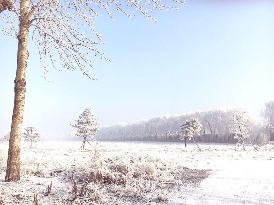 Snow Snow Tree White Winter Winter Sky