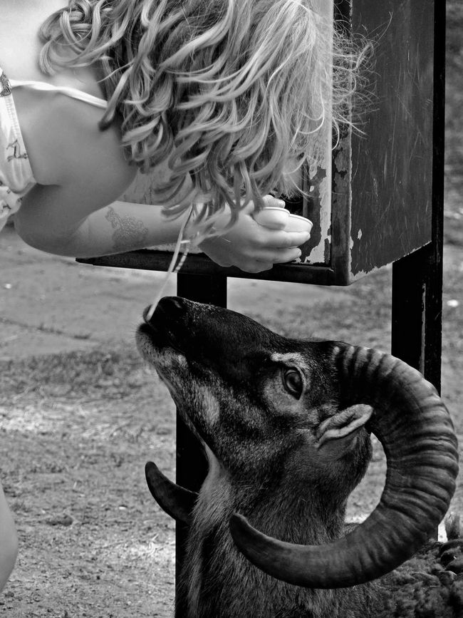 Anticipation | Animal Kingdom Casual Clothing Child Close-up Clothing Day Emotional Photography Focus On Foreground Leisure Activity Lifestyles Mammal Outdoors Part Of People Pets Portrait Profile Side View Two Feel The Journey Pets We Love