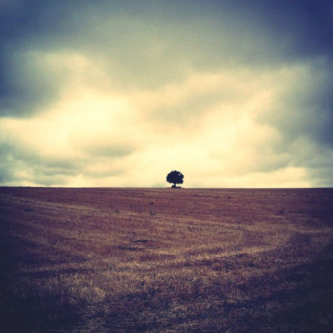 Eye4photography  EyeEm Best Shots EyeEm Nature Lover Trees Fields Of Gold Skyporn Clouds And Sky Nature Portugal Lastmanstanding
