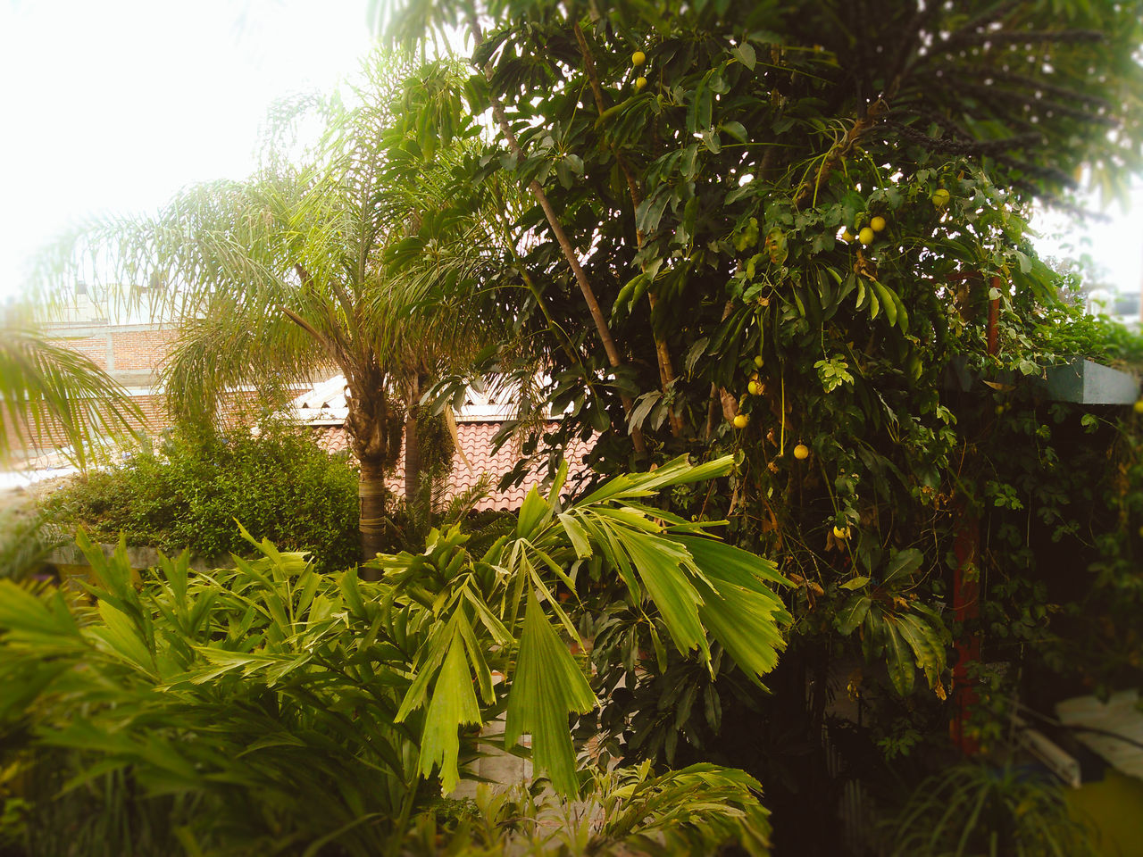 growth, green color, tree, palm tree, plant, nature, leaf, day, tranquility, no people, outdoors, banana tree, beauty in nature, grass, sky