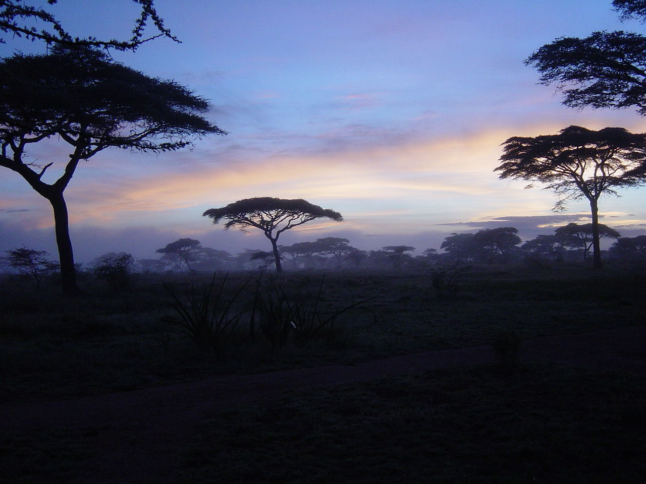 Beauty In Nature Cloud - Sky Day Dusk Growth Landscape Nature No People Outdoors Scenics Serengeti National Park Silhouette Sky Sunset Tanzania Tranquil Scene Tranquility Tree