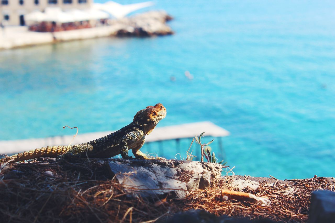 Searching for the sun heat! Reptile Water Animal Wildlife Animals In The Wild Lizard One Animal Sea Outdoors No People Nature Animal Themes Iguana Day Beauty In Nature