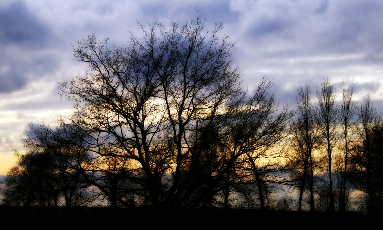 Bare Tree Beauty In Nature Branch Cloud - Sky Day Growth Nature No People Outdoors Scenics Silhouette Sky Sunset Tranquil Scene Tranquility Tree Willow Tree