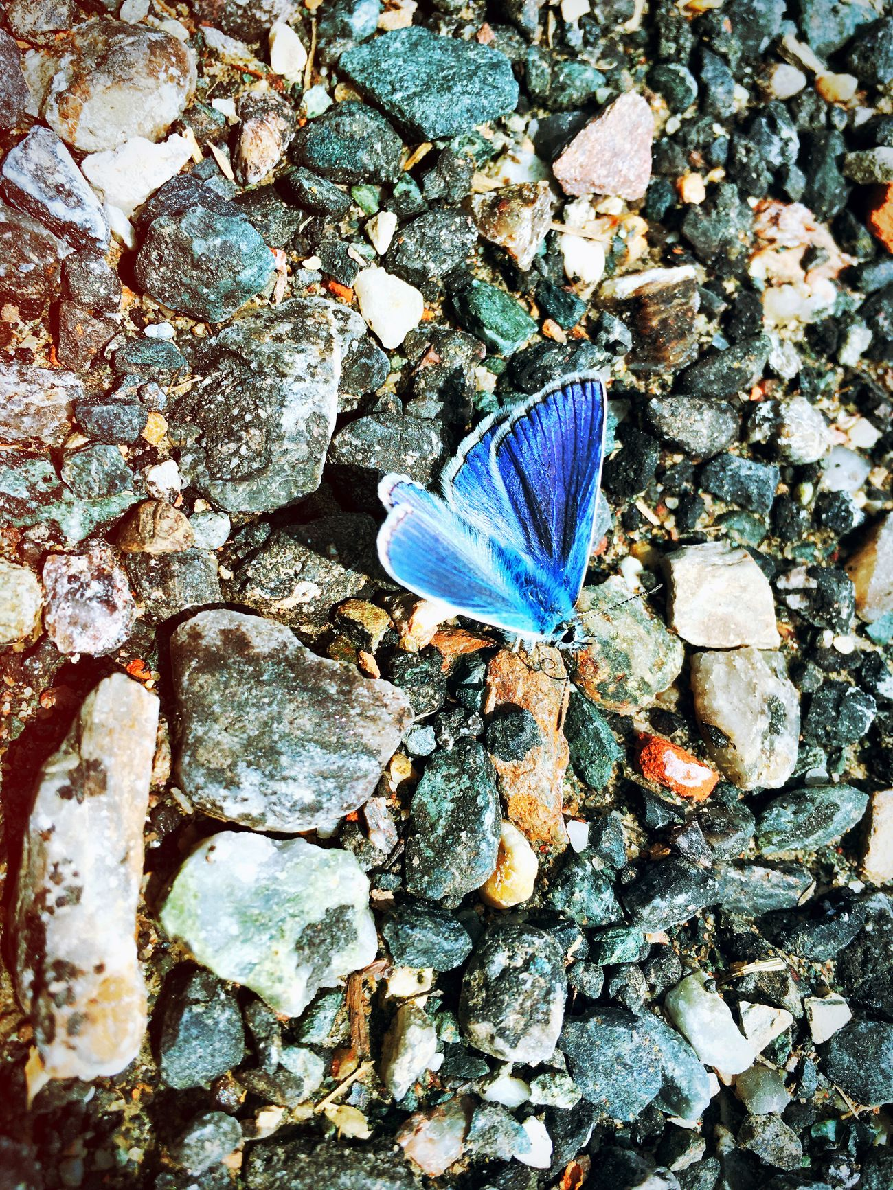 Nice Little Butterfly Over There in Blue Beauty In Nature Beauty Insect Animal Near The Road Road Street in Austria Styria Flying High Flying Animals