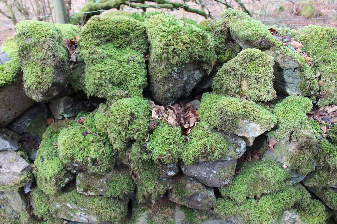 When nature fights back... Nature Growth No People Close-up Green Color Day Outdoors Beauty In Nature Animal Themes Freshness Lakedistrictnationalpark Landscape Beauty In Nature Green Color Moss