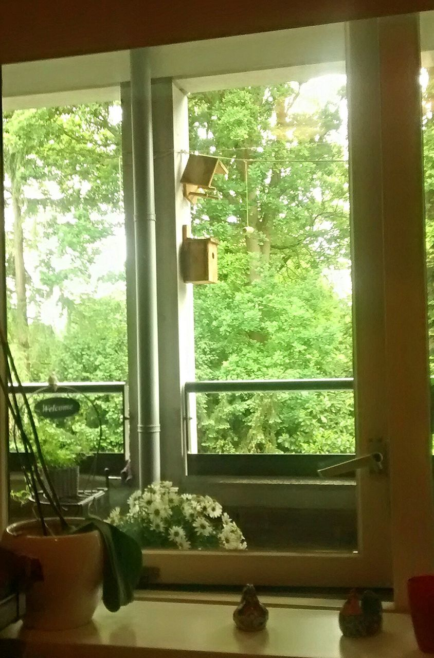 window, indoors, glass - material, tree, window sill, home interior, potted plant, day, plant, table, green color, growth, no people, domestic room, nature, food, architecture, close-up