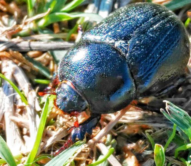 Bug One Animal Animal Themes Nature No People Beetle Bug Close-up Macro Insect