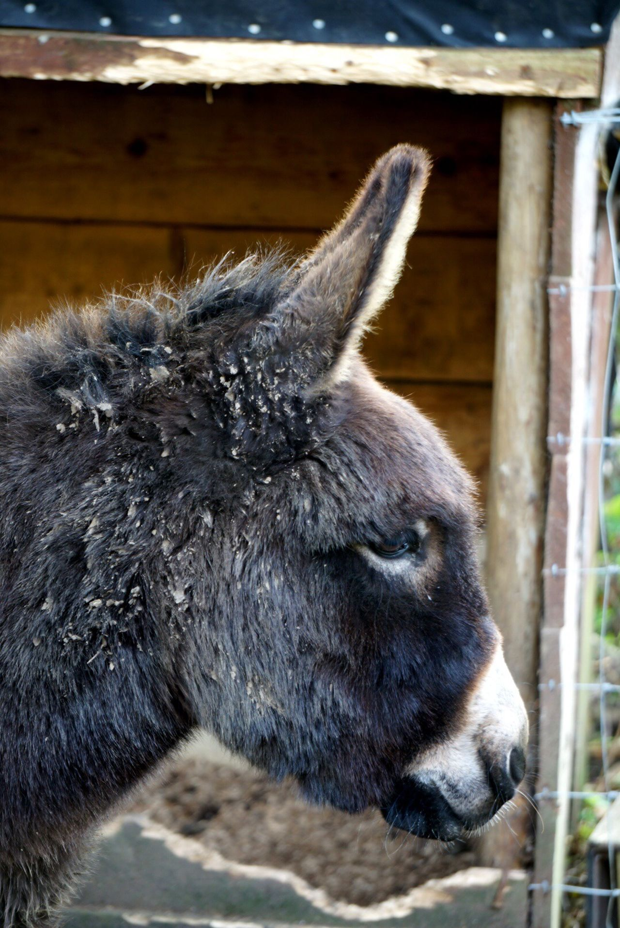 Beautiful stock photos of donkey, Animal Themes, Built Structure, Day, Domestic Animals
