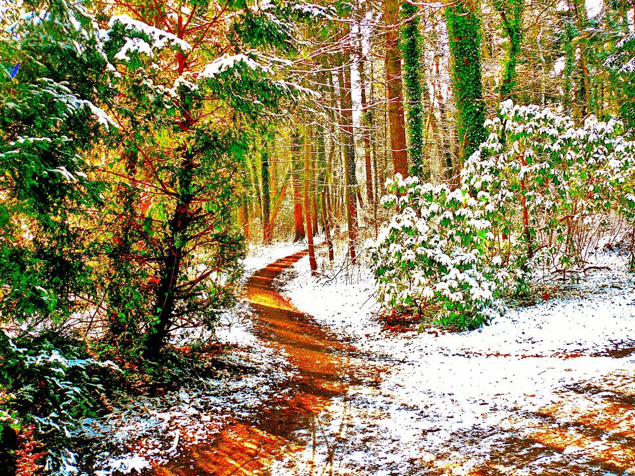 Heavy Edits Wood Park Snow Way Trees Snow On The Ground Snow On Trees Colorful Colorexplosion Going For A Walk Germany GERMANY🇩🇪DEUTSCHERLAND@ Winter Panasonic Lumix