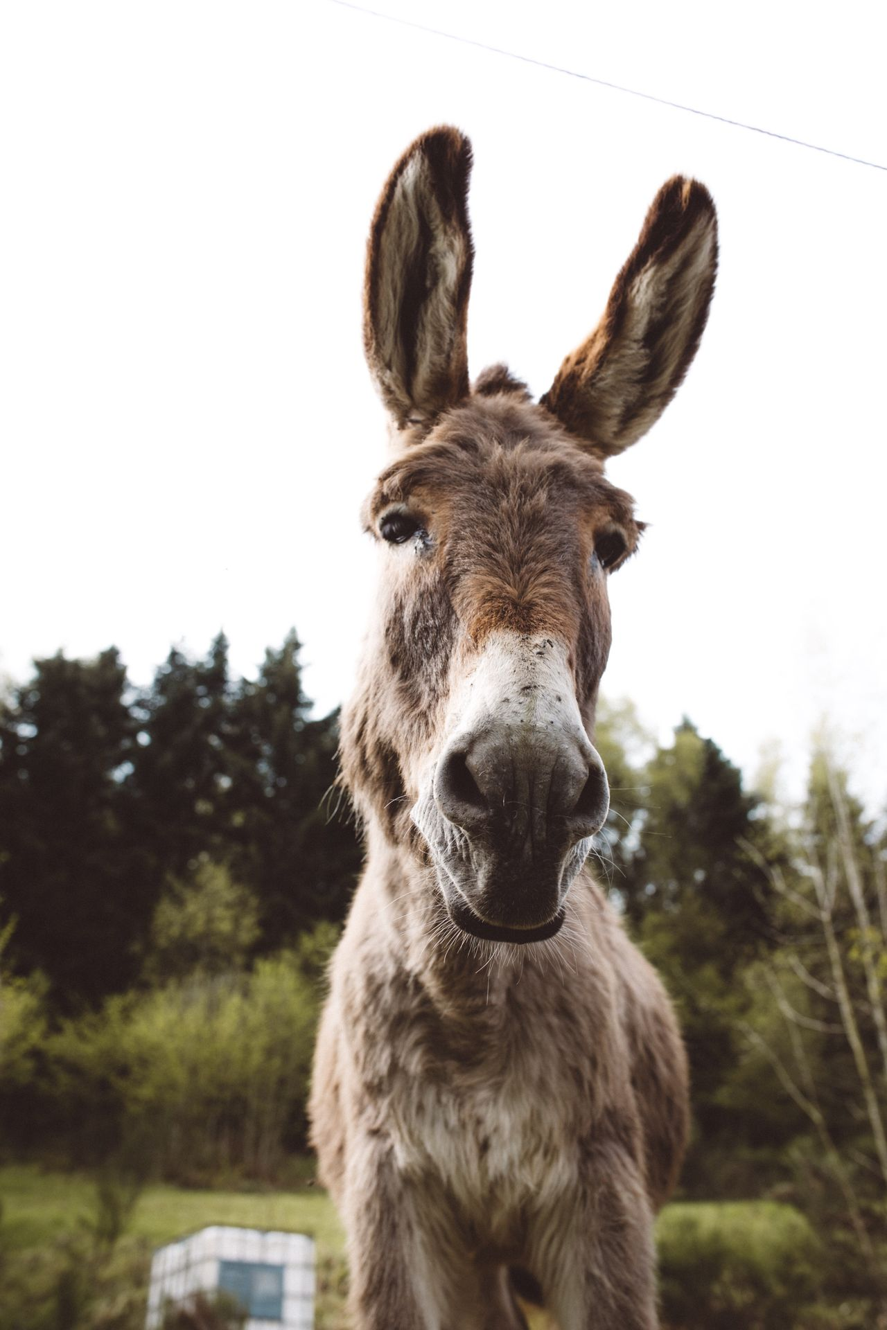 Donkey Animals In The Wild Animals Animal Cute Outdoors Outdoor Photography Exploring Explore Wildlife EyeEm Nature Lover Eye4photography  Nature Nature_collection Naturelovers