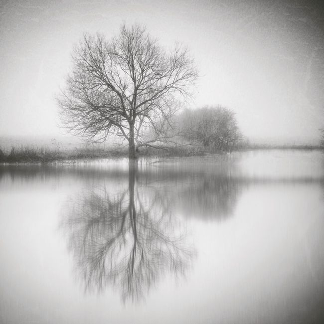 Thin Ice Bare Tree Tranquil Scene Tree Reflection  Beauty In Nature Winter Trees Monochrome Photography Reflection Lonely Tree Majestic Riverside Atmospheric Mood Waterfront Countryside Landscape_photography Calm Darkart Bleak Wintertime Reflection Tranquility Northamptonshire Mextures