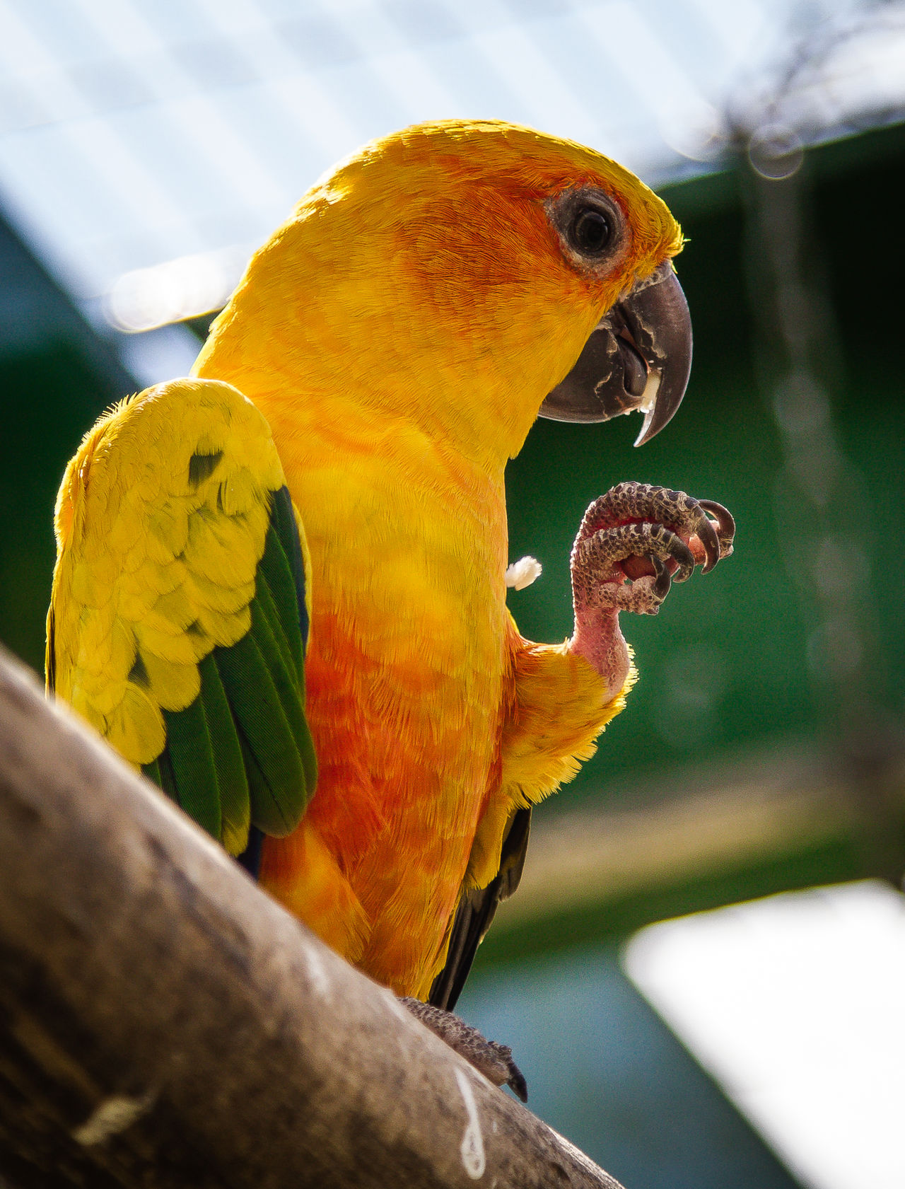 Animal Themes Animal Wildlife Animals In The Wild Beauty In Nature Bird Close-up Day Focus On Foreground Macaw Nature No People Outdoors Parrot Perching