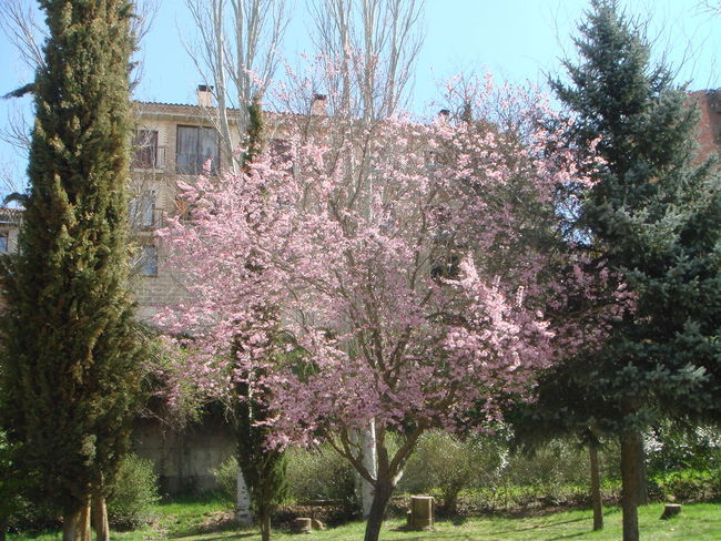 Showcase April trees pink green colors house chimney garden blue sky nature spring beauty pretty plants Nature's Diversities