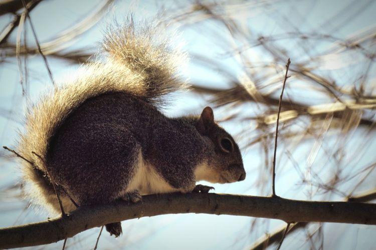 Little Animal Animal Photography Animals Squirrel Closeup Animal_collection Squirrel! EyeEm Animal Lover Animal Squirrel Squirrels