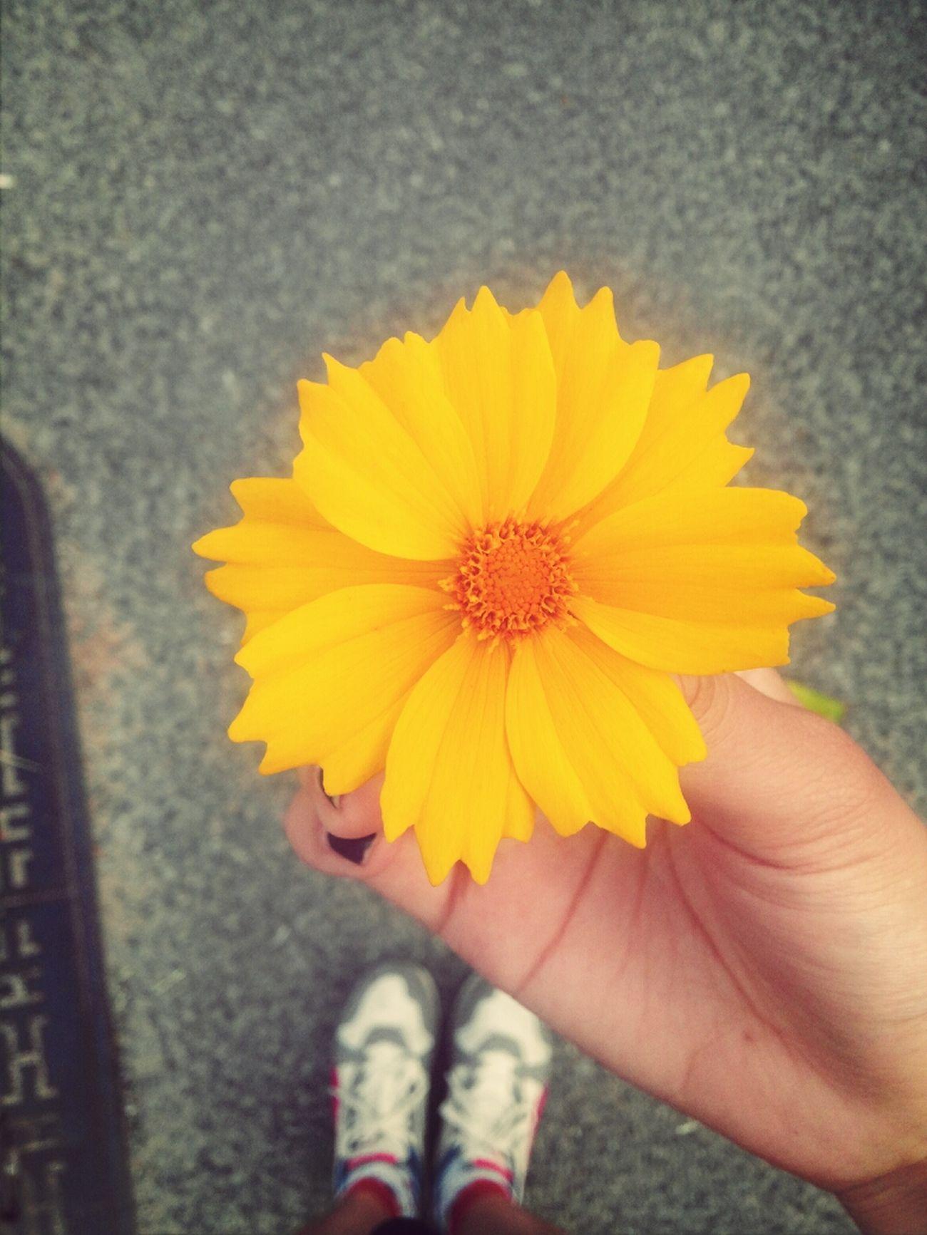 Flower Take Me Thank You With My Lover💕 현장견습 다녀오는 길에 내 생각 나서 가져온 선물??작은 꽃 하나지만 그 감동은 어느 꽃다발보다 더 크넹;> 고마워 내 사랑 hj ;) 사랑합니동??