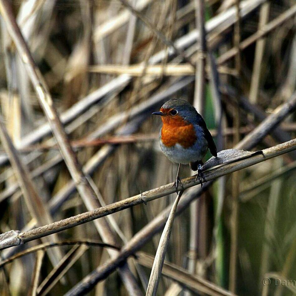 Nature Wildlife Flora Fauna