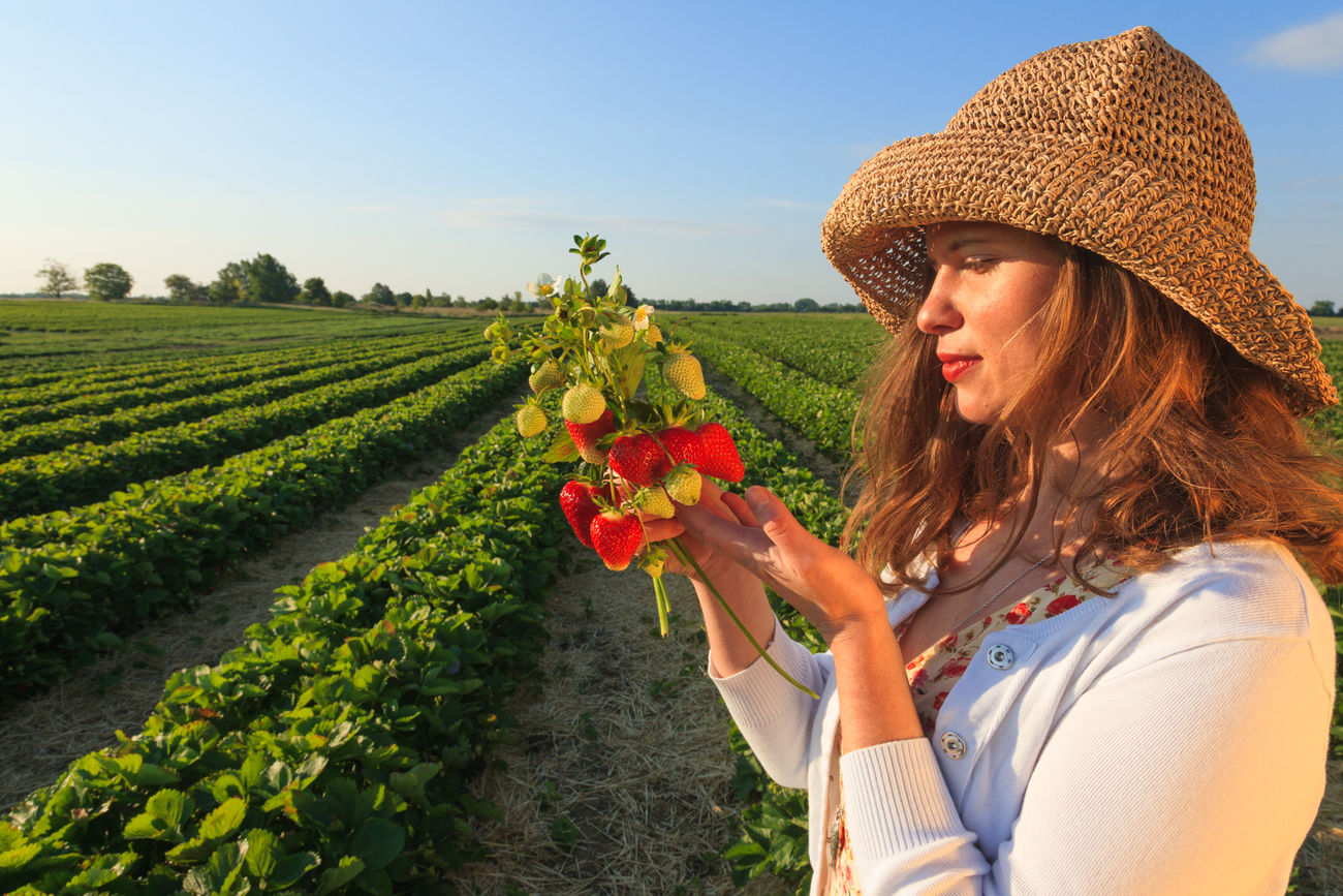 Beautiful stock photos of obst, agriculture, rural scene, field, farm